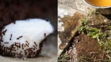 Zarar Vermeden Karıncaları Evden Kovabilmeniz İçin 5 Ucuz Ve Doğal Yöntem
