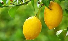 Limonun Bu YararlarınıHiç Duymadınız, Limonun Faydaları