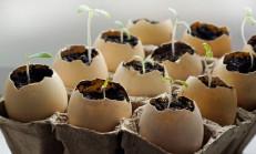 Yumurta Kabuklarını Bir Daha Çöpe Atmayacaksınız! Yumurta Kabuklarının Faydaları